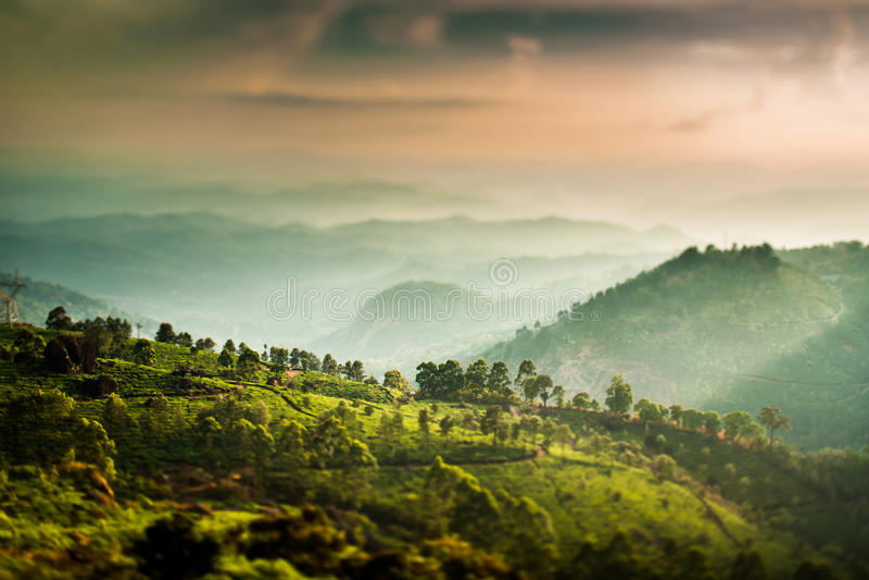 Plantaciones de té en la India (lente inclinable del cambio) fotografía de archivo libre de regalías