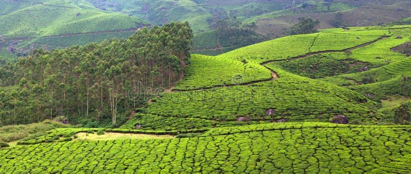 Plantaciones de té en la montaña occidental de Ghats, Kerala, la India del sur fotos de archivo