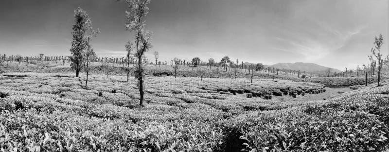 Plantaciones de té hermosas de las colinas de Nelliyampathy imagenes de archivo