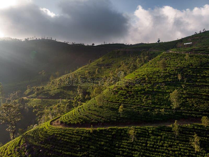 Plantaciones de t? magn?ficas en Sri Lanka imagen de archivo libre de regalías
