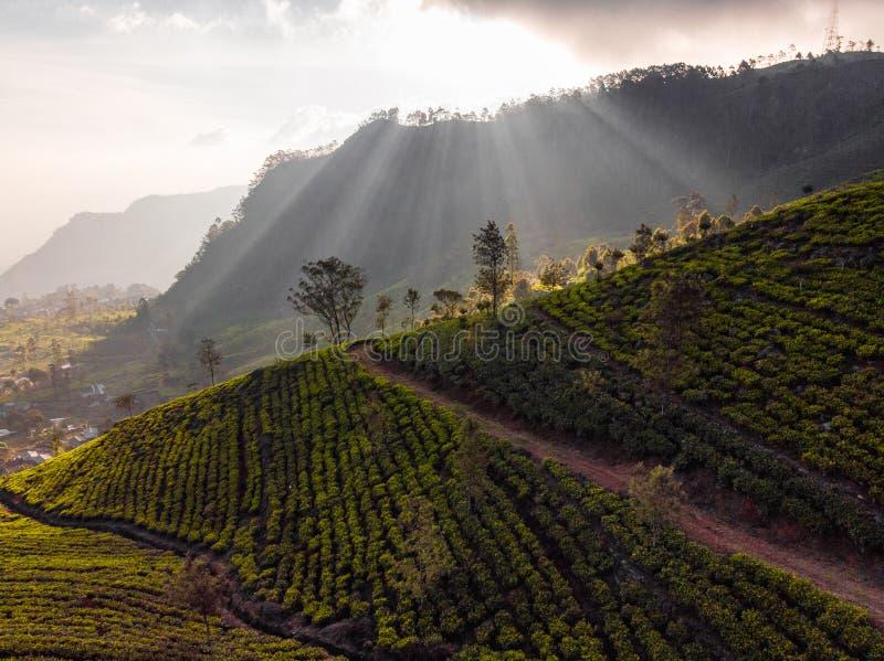 Plantaciones de t? magn?ficas en Sri Lanka foto de archivo libre de regalías
