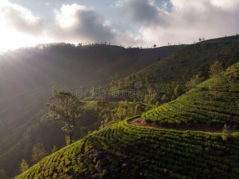 Plantaciones de t? magn?ficas en Sri Lanka fotos de archivo