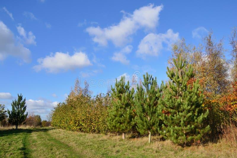 Plantacja iglaści i deciduous drzewa pod jaskrawym błękitem obraz stock