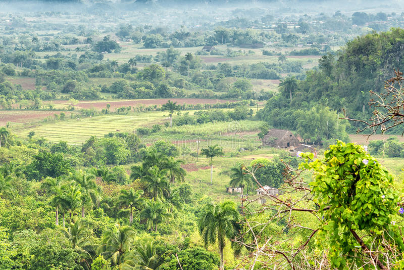 Plantacje i tytoń stajnie przy Vinales Valle zdjęcia stock