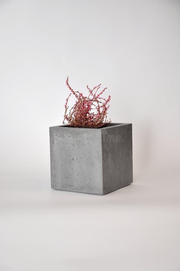 Plantador concreto do cubo imagens de stock