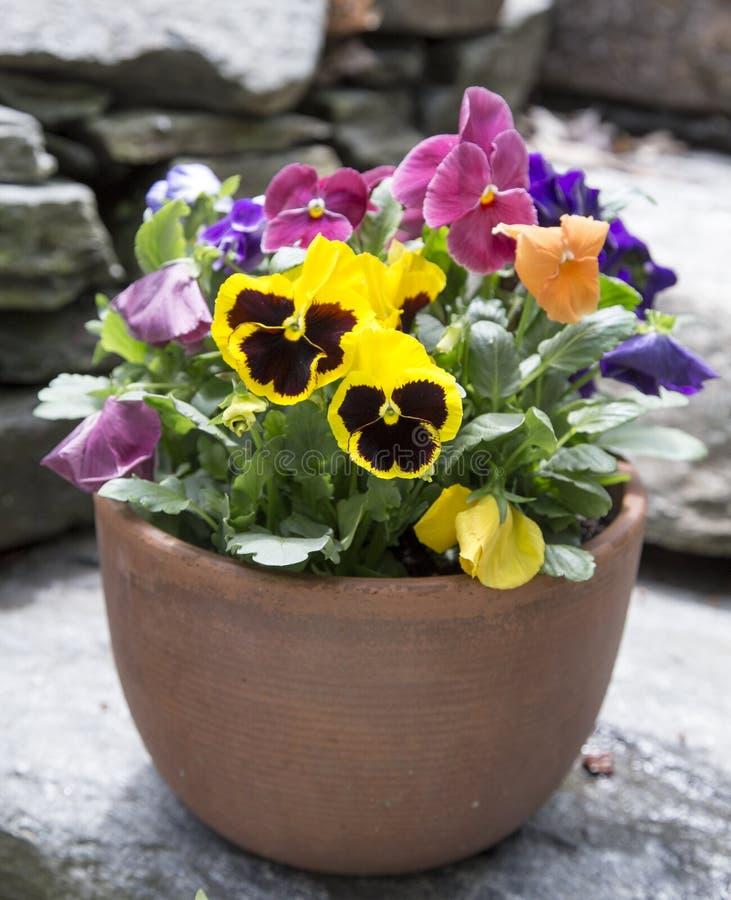 Plantador do pátio de Pansy Flowers fotografia de stock royalty free