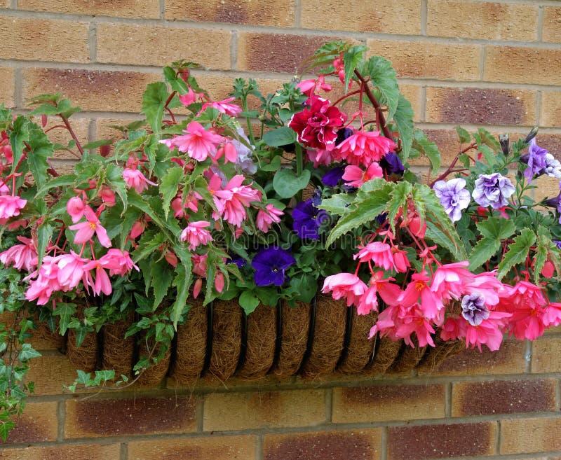 Plantador montado en la pared por completo de flores foto de archivo libre de regalías
