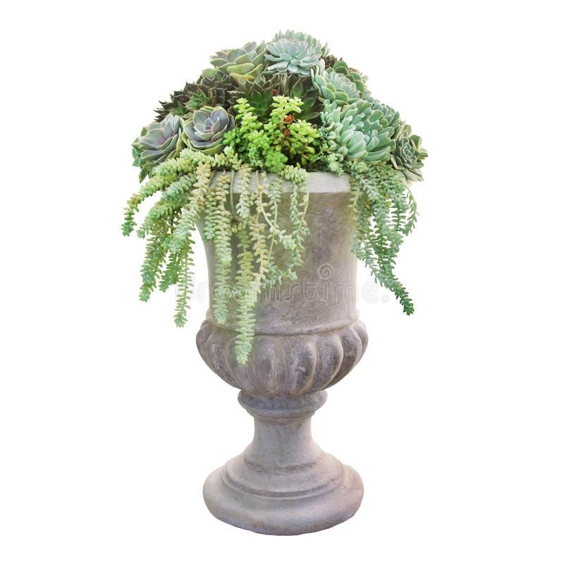 Plantador Pedestal de Stoneware de estilo vintage con disposición de plantas suculentas aisladas en fondo blanco fotografía de archivo libre de regalías