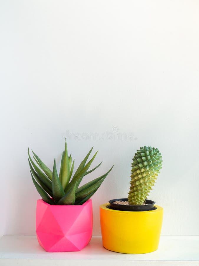 Plantadores concretos de la ronda hermosa con la planta del cactus Potes concretos pintados coloridos para la decoración casera imagenes de archivo