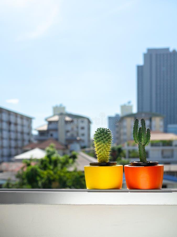 Plantadores concretos de la ronda hermosa con la planta del cactus Potes concretos pintados coloridos para la decoración casera foto de archivo libre de regalías