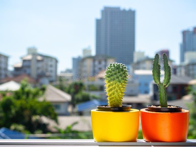 Plantadores concretos de la ronda hermosa con la planta del cactus Potes concretos pintados coloridos para la decoración casera imagen de archivo libre de regalías