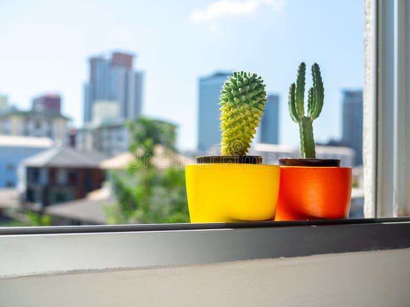 Plantadores concretos de la ronda hermosa con la planta del cactus Potes concretos pintados coloridos para la decoración casera foto de archivo