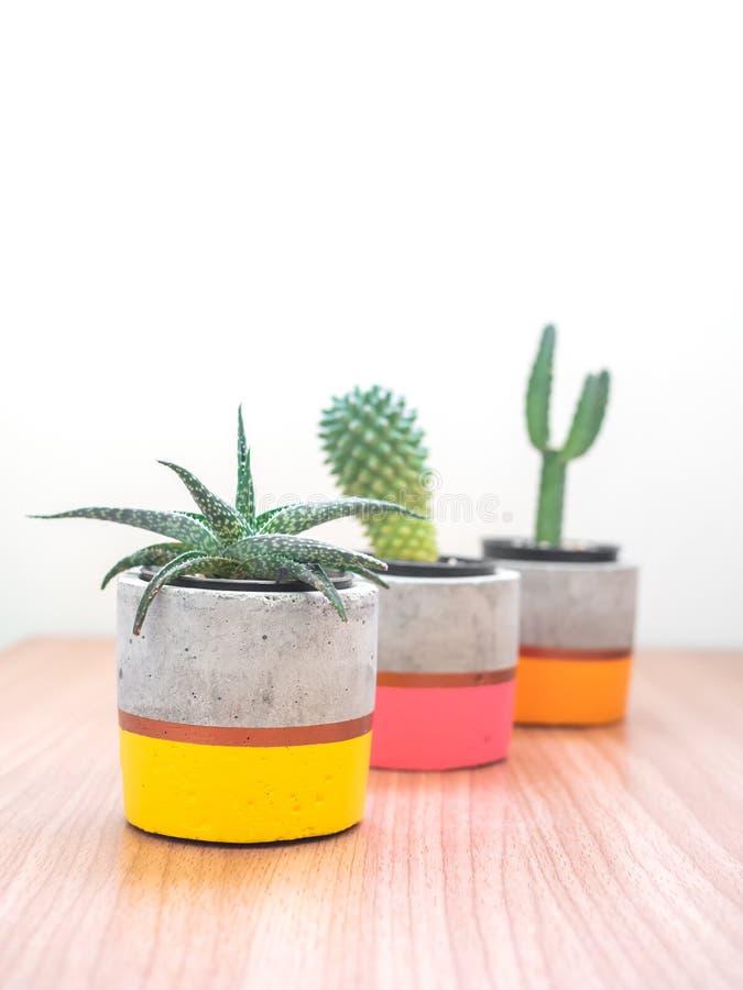 Plantadores concretos modernos coloridos con las plantas del cactus Potes concretos pintados para la decoraci?n casera foto de archivo