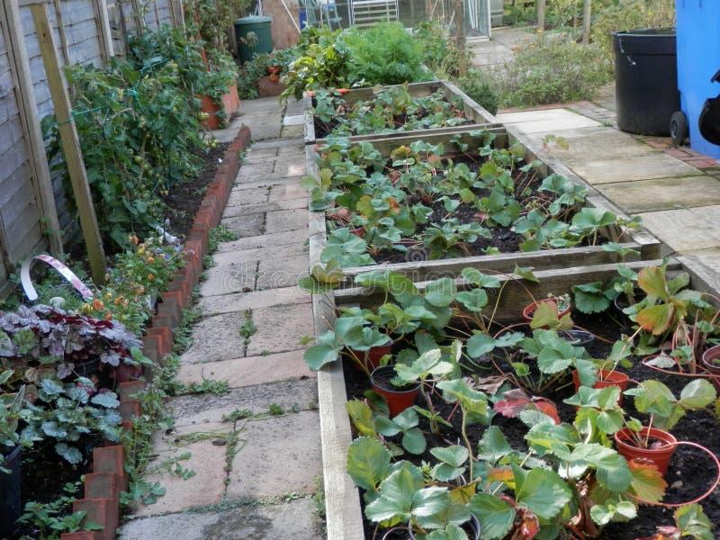Plantadores da morango e plantas de tomate foto de stock