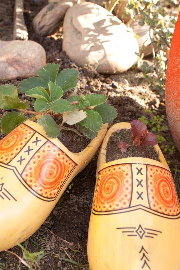 Plantadores de madera del zapato foto de archivo