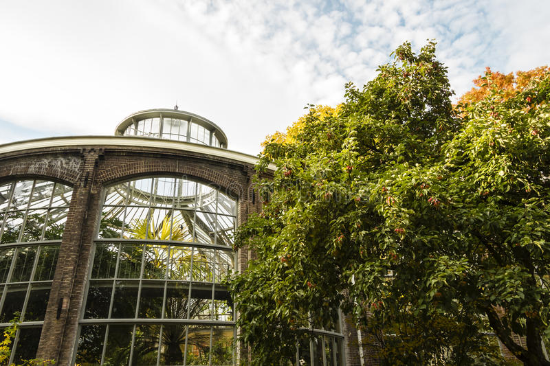 Plantage greenhouse in Amsterdam, autumn time.  royalty free stock images