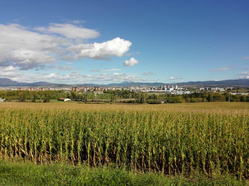 Plantage neben Stadt stockbild