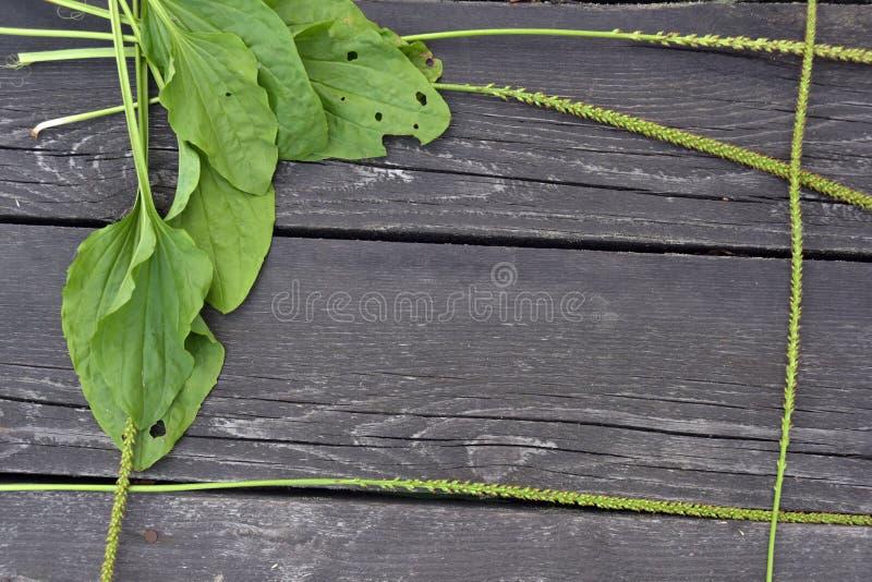 Plantain σε ένα ξύλινο υπόβαθρο στοκ εικόνα