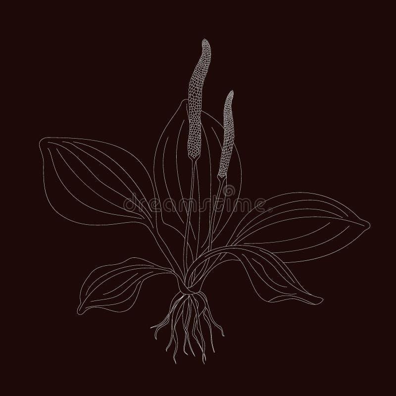 plantain illustration de vecteur