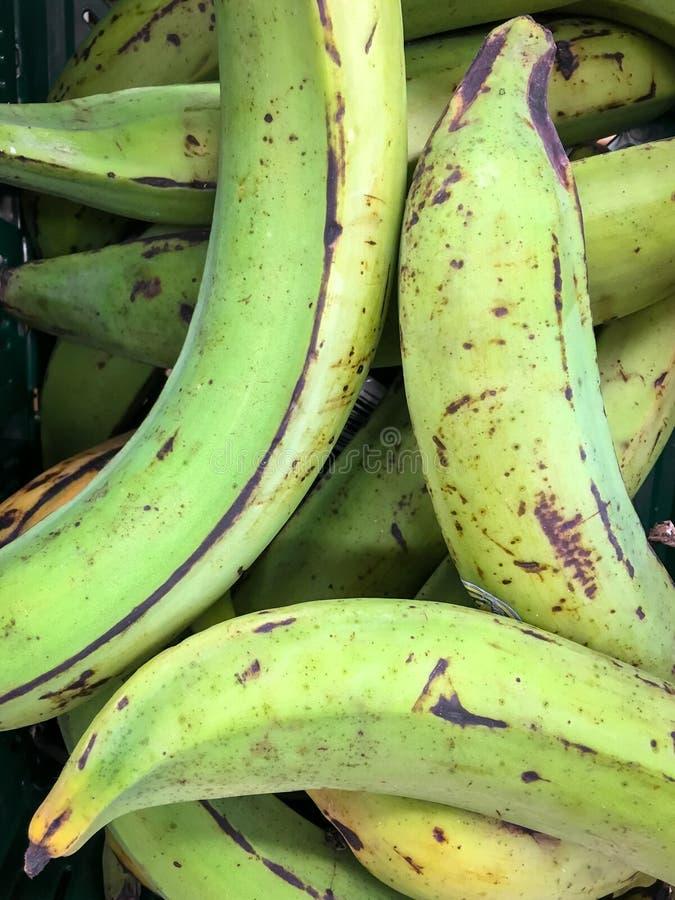 Plantain vert d'Equateur image libre de droits