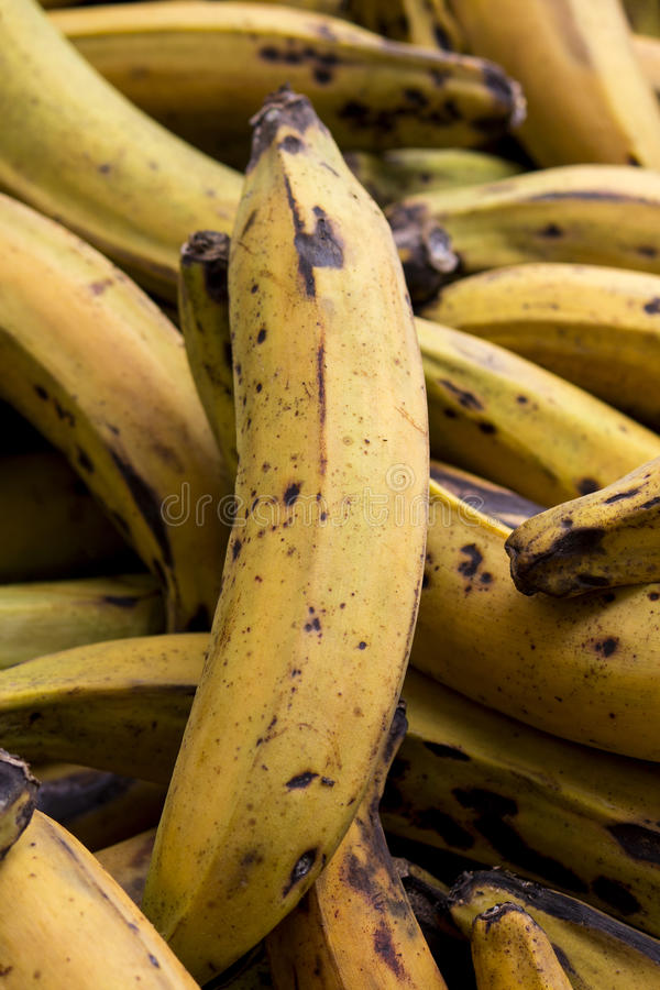 Plantains royaltyfri foto