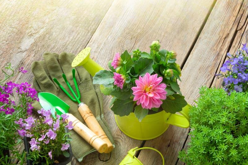 Plantan av trädgården blommar för att plantera, trädgårds- utrustning på träbräde Top beskådar arkivfoto