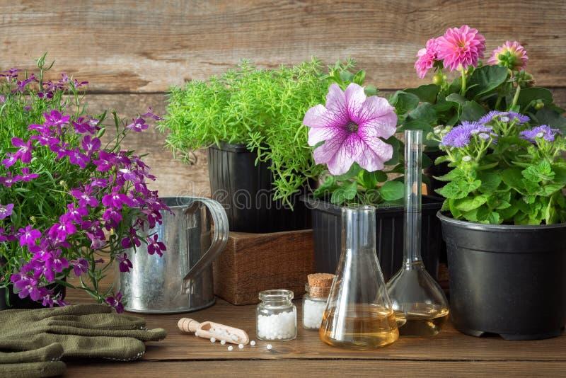 Plantan av trädgårds- växter och blommor och att bevattna kan och homeopatiska boter för växter royaltyfria foton