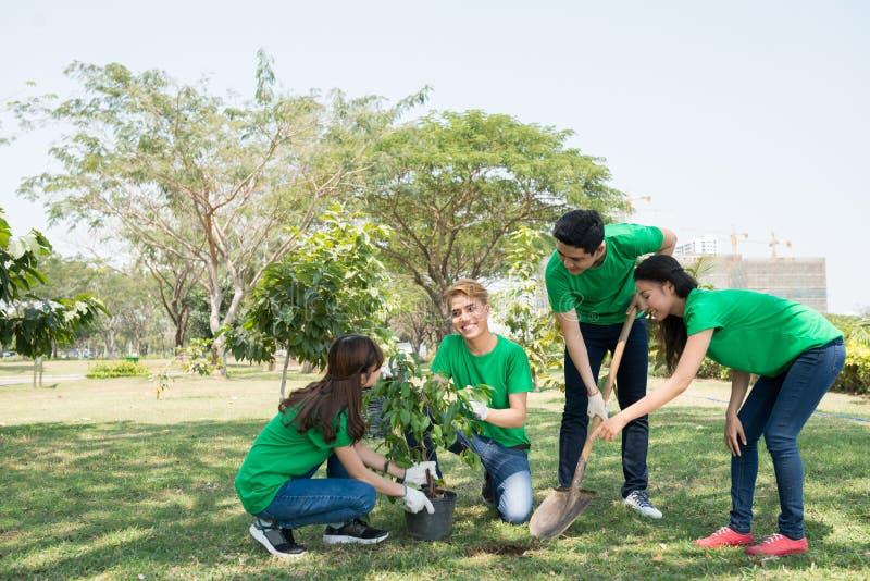 Plantando a árvore foto de stock royalty free