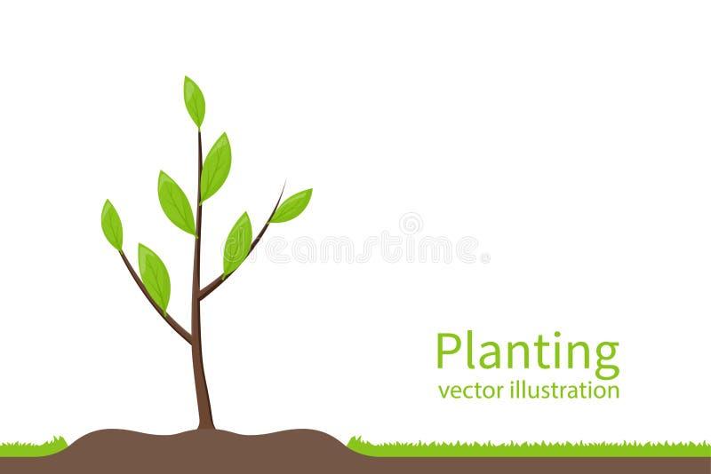 Plantando a árvore Processo que planta o conceito ilustração stock