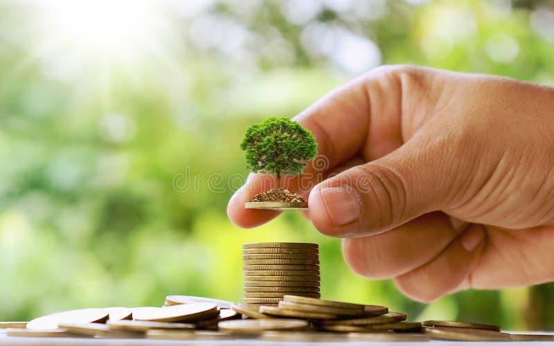 Plantando árvores pequenas à mão em moedas e em fundos verdes naturais imagens de stock royalty free