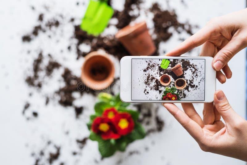 Plantando a composição das plântulas Mãos fêmeas que guardam um smartphone fotografia de stock royalty free