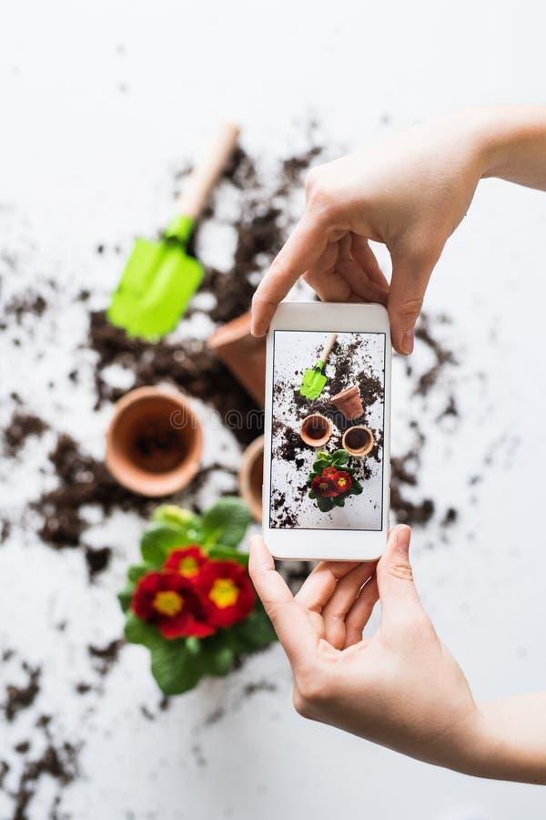 Plantando a composição das plântulas Mãos fêmeas que guardam um smartphone fotografia de stock