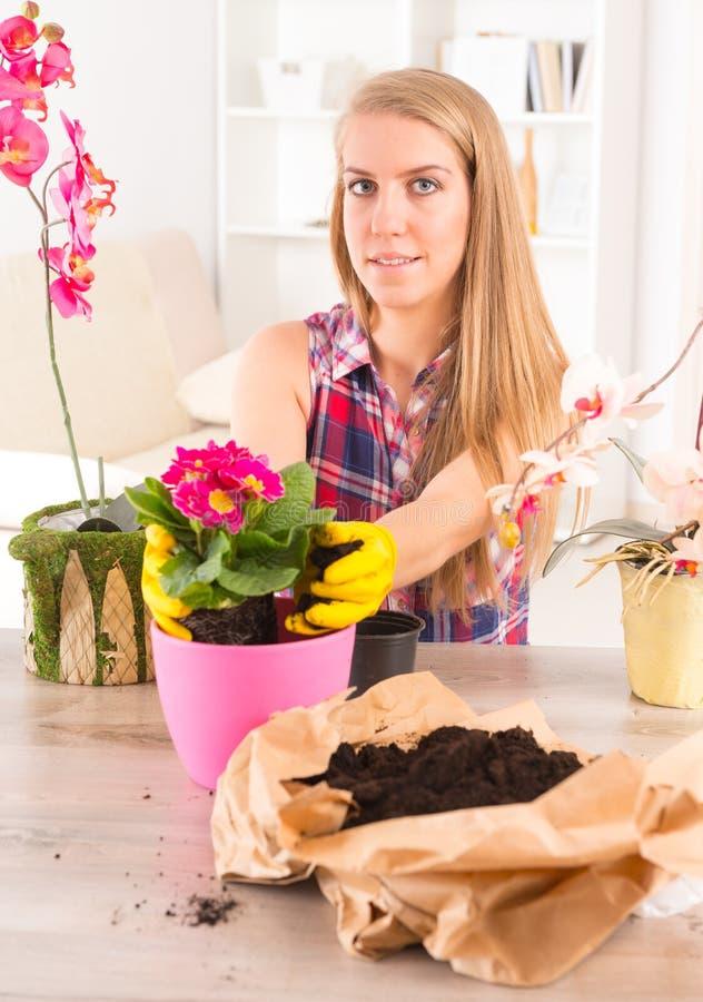 Plantando a flor do colorfull em um vaso de flores fotos de stock