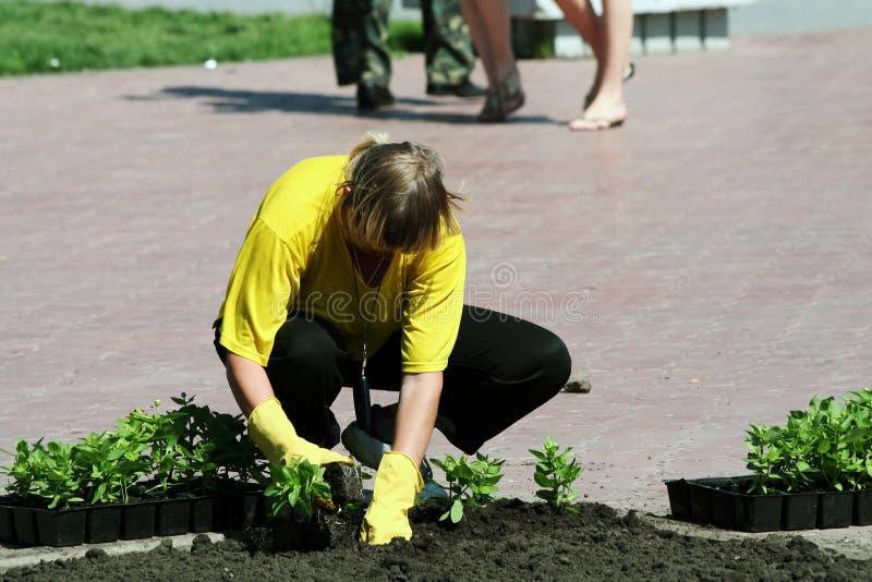 Plantando flores. fotografia de stock royalty free
