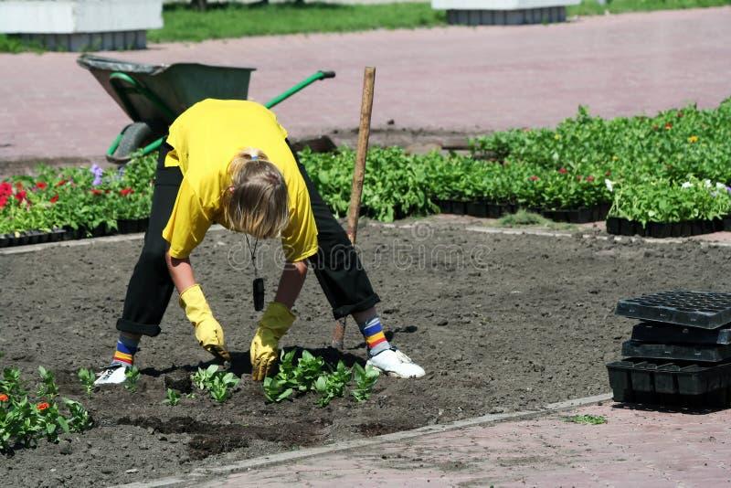 Plantando flores. foto de stock