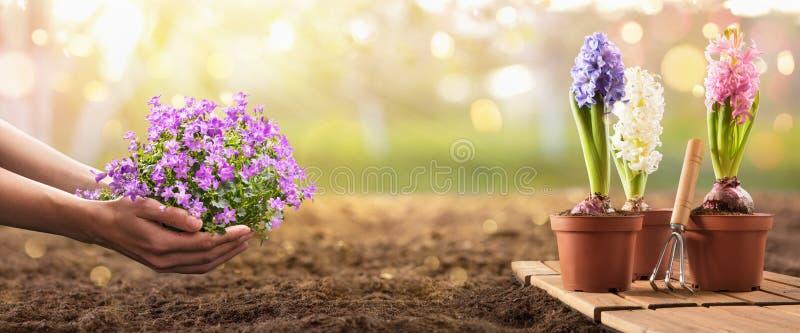 Plantando Flores em um Véu de Jardim foto de stock royalty free
