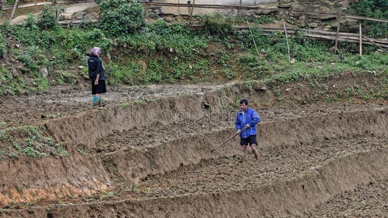 Plantando o arroz imagens de stock