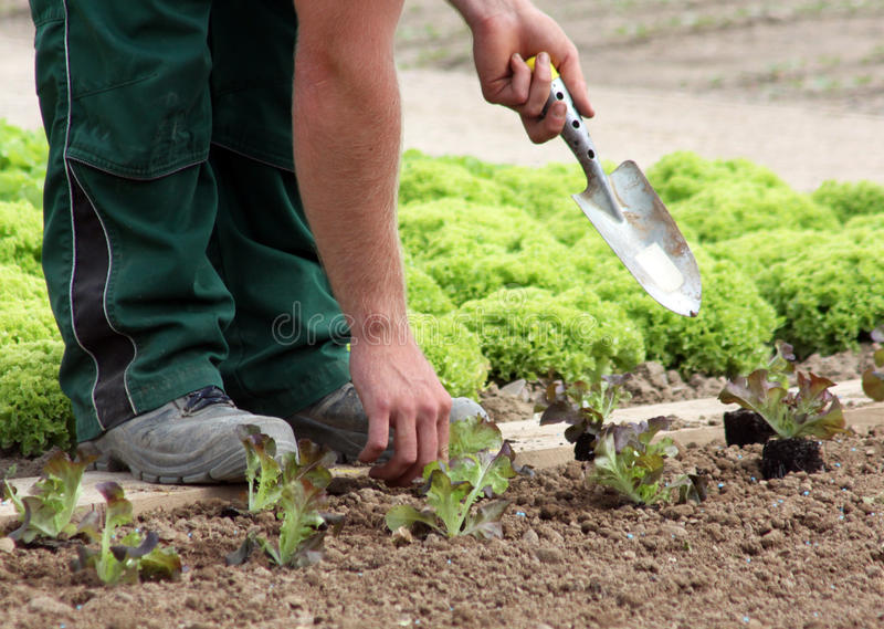 Plantando o jardim vegetal foto de stock royalty free