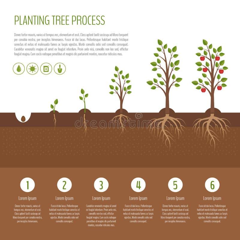 Plantando o processo da árvore infographic Fases do crescimento da árvore de Apple ste ilustração do vetor