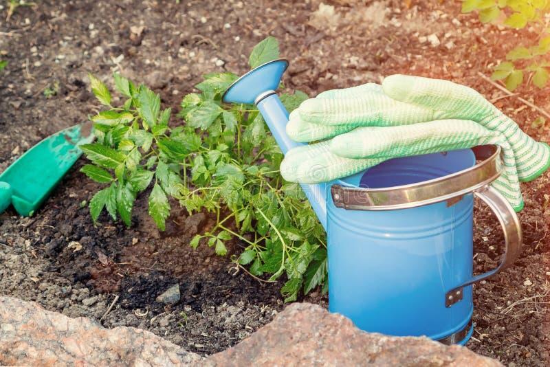 Plantando plantas Astilba no jardim ornamental da cama de flor - feito fotografia de stock