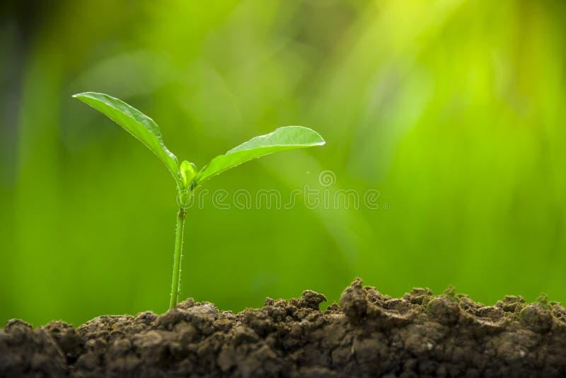 Plantando ?rboles, amando el ambiente y protegiendo la naturaleza que alimenta el d?a del ambiente mundial de las plantas para ay fotos de archivo
