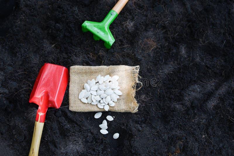 Plantando a semente de abóbora no solo na agricultura do jardim vegetal/conceito de jardinagem dos trabalhos imagens de stock