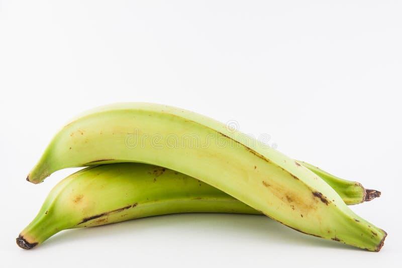 Plantano o banana verde Musa x paradisiaco immagini stock