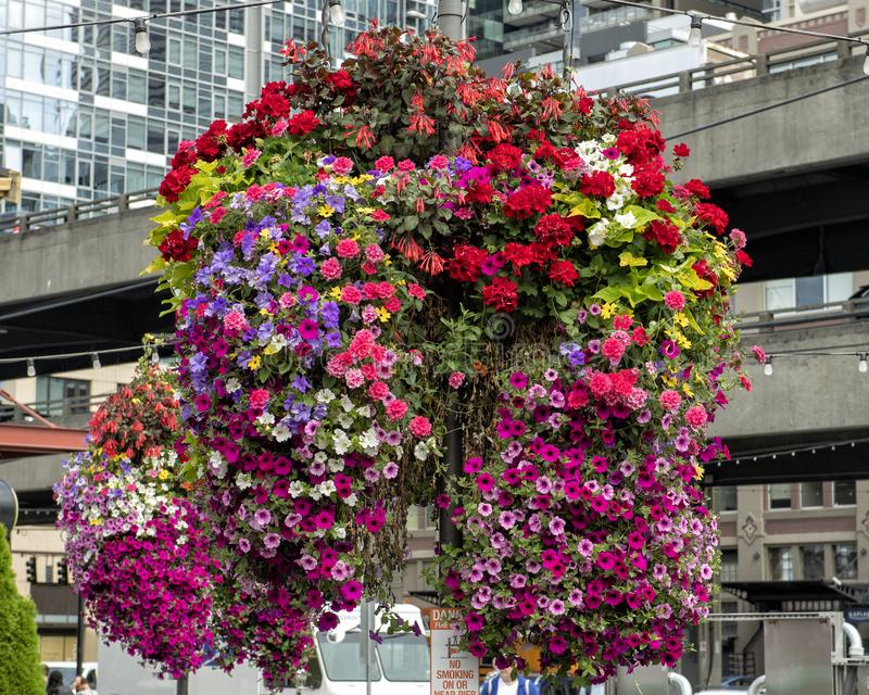 A plantar on a pole obscured by it& x27;s brightly colored flowers of many types on Pier 55 in Seattle, Washington. stock photo