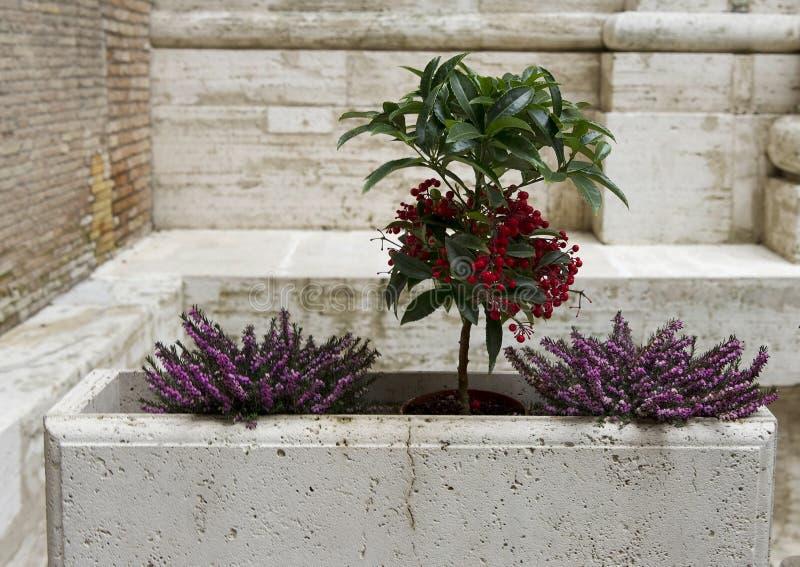 Plantar Vatican Museum courtyard stock photography
