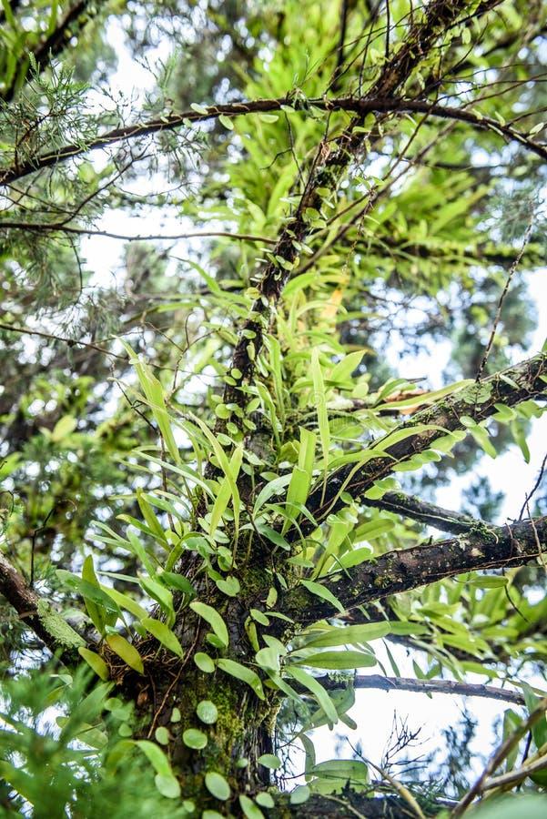 Plantas úmidas fotos de stock royalty free