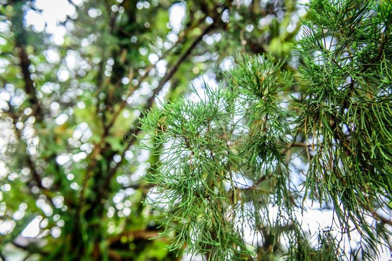 Plantas úmidas imagens de stock royalty free