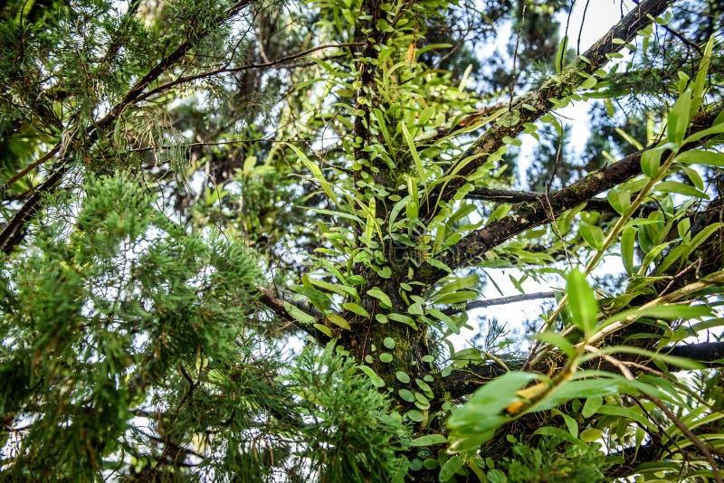 Plantas úmidas fotografia de stock