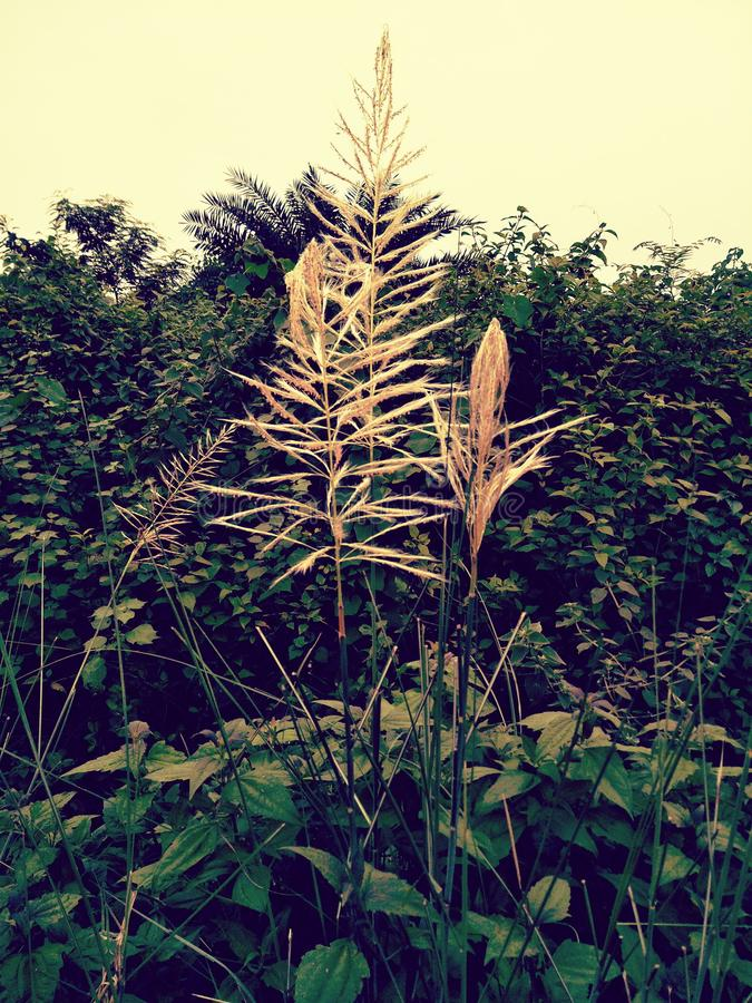 plantas fotografia de stock royalty free