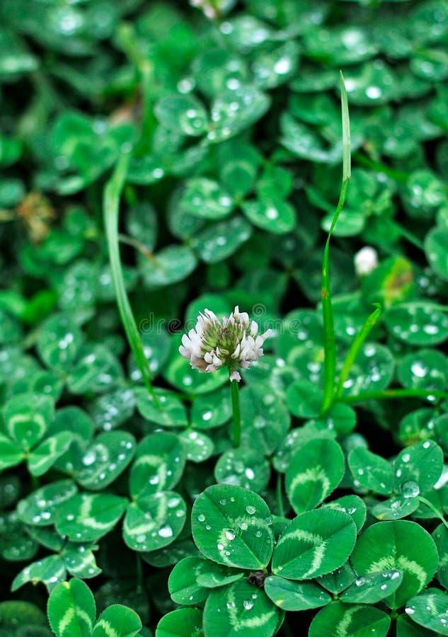 Download Plantas imagem de stock. Imagem de jardim, sementes, verde - 12805295